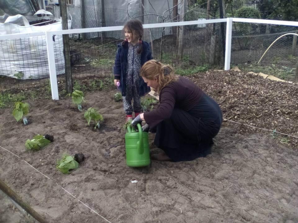 Plantjes zetten